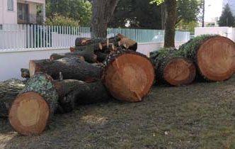 Abattage d'arbres dangereux à Bordeaux Caudéran (33)