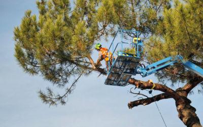 Abattage d'un pin au siège de Temsol à Mérignac (33)